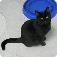 Adopt A Pet :: Dusky - Belleville, MI