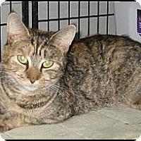 Adopt A Pet :: Philomina - Galloway, NJ