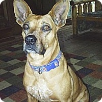 Adopt A Pet :: Noelle - cedar grove, IN