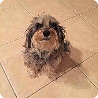 Adopt A Pet :: KIWI - Odessa, FL