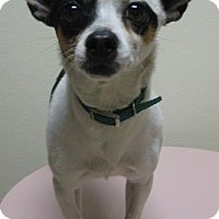Adopt A Pet :: Mickey - Gary, IN