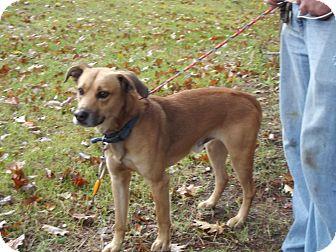 Labrador Retriever/Hound (Unknown Type) Mix Dog for adoption in Cheboygan, Michigan - Lab Hound