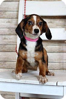 Dachshund Mix Dog for adoption in Waldorf, Maryland - Lonnie