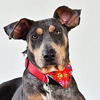 Adopt A Pet :: Callie - Nanaimo, BC