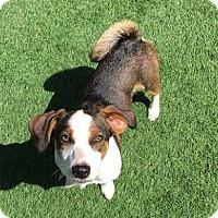Adopt A Pet :: JD - Toronto, ON