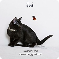 Adopt A Pet :: Jett - Riverside, CA