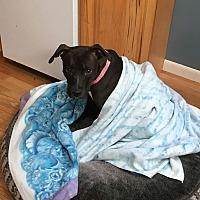 Adopt A Pet :: Nena - Benton, PA