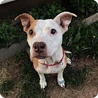 Adopt A Pet :: Eden - Springfield, MO