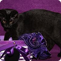 Adopt A Pet :: Louise (Updated Photos) - Marietta, OH