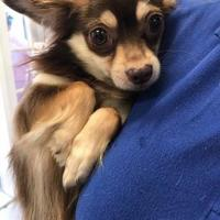 Adopt A Pet :: Murphy - Gainesville, FL