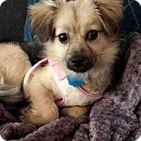 Adopt A Pet :: Duckie - Princeton, MN