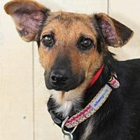 Adopt A Pet :: Columbia - Encinitas, CA