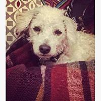 Adopt A Pet :: Rhubarb - Houston, TX