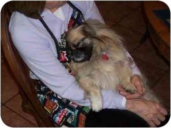 Pekingese Dog for adoption in Richmond, Virginia - Maggie Va. Beach, VA
