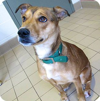 Shepherd (Unknown Type) Mix Dog for adoption in Jackson, Michigan - Gretchen