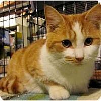 Adopt A Pet :: O'Malley - Colmar, PA