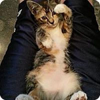 Adopt A Pet :: Cali - San Diego, CA