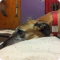 Adopt A Pet :: Robin - Windsor Heights, WV