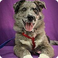 Adopt A Pet :: Winterhawk - Broomfield, CO