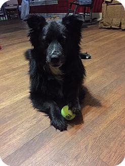 Border Collie Mix Dog for adoption in Wichita Falls, Texas - Mickie