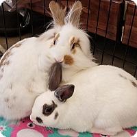 Adopt A Pet :: Gandalf - Los Angeles, CA