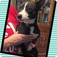 Adopt A Pet :: Fred - Scottsdale, AZ