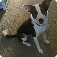 Adopt A Pet :: Nessa - Oliver Springs, TN