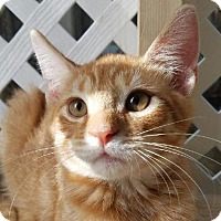 Adopt A Pet :: Mathew - Miami, FL
