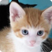 Adopt A Pet :: cinnamon - Muskegon, MI