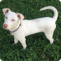 Adopt A Pet :: Ryder - Topeka, KS
