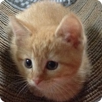 Adopt A Pet :: GINGER - Clayton, NJ
