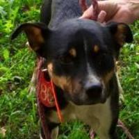 Adopt A Pet :: Travis - Fairfax Station, VA