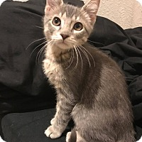 Adopt A Pet :: Einstein - Loveland, CO