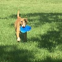 Bull Terrier Dog for adoption in Houston, Texas - Winston