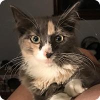 Adopt A Pet :: Princess Anna - Hazlet, NJ