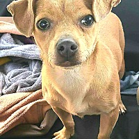 Adopt A Pet :: Tanner - Andalusia, PA