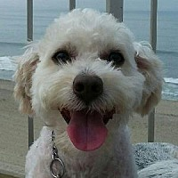 Adopt A Pet :: Louie - La Costa, CA
