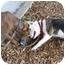 Photo 3 - American Staffordshire Terrier Mix Puppy for adoption in Berkeley, California - Eddie