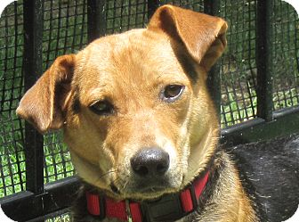 Shepherd (Unknown Type)/Beagle Mix Dog for adoption in Hot Springs, Arkansas - Buddy T