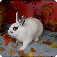 Adopt A Pet :: Diva - Roseville, CA