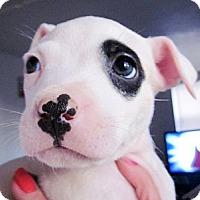 Adopt A Pet :: Jack - Colleyville, TX