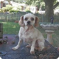 Adopt A Pet :: Star - Clarksville, TN