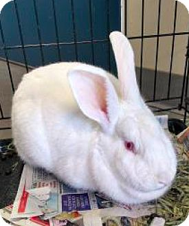 New Zealand Mix for adoption in Lindsay, Ontario - Gilly