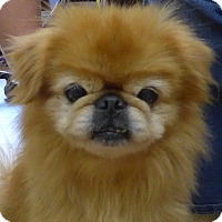 Adopt A Pet :: Moto - Manning, SC
