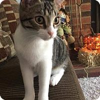 Adopt A Pet :: Savannah - Virginia Beach, VA