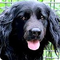 Adopt A Pet :: KODA(DROP DEAD GORGEOUS!! WOW! - Wakefield, RI