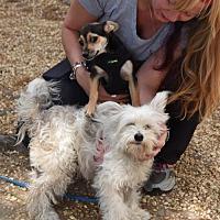 Adopt A Pet :: Cathy & Lecha - Philadelphia, PA