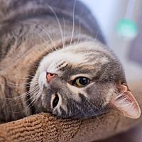 Adopt A Pet :: Cutie - Boise, ID