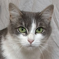 Adopt A Pet :: Moma Bear - Sacramento, CA