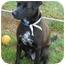 Photo 2 - Labrador Retriever Mix Dog for adoption in kennebunkport, Maine - Artie - Pending!